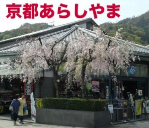 Kyosakura