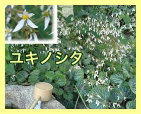 Yukinoshita_2