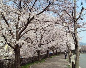 Sakura2018